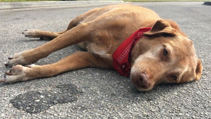 Con chó Paco nằm phục tại hiện trường. Ành: ActionNewsJax