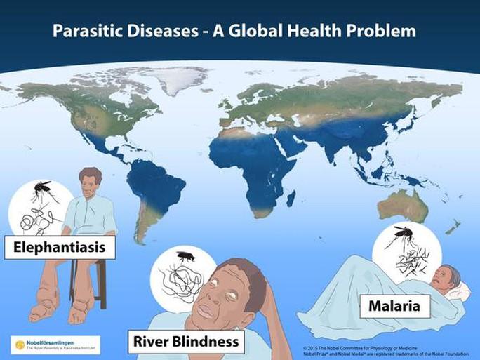 Giải Nobel Y học năm nay tôn vinh các phát hiện nhằm tìm ra giải pháp cho các vấn đề sức khỏe toàn cầu về lây nhiễm từ sinh vật ký sinh và số rét. Ảnh: Guardian