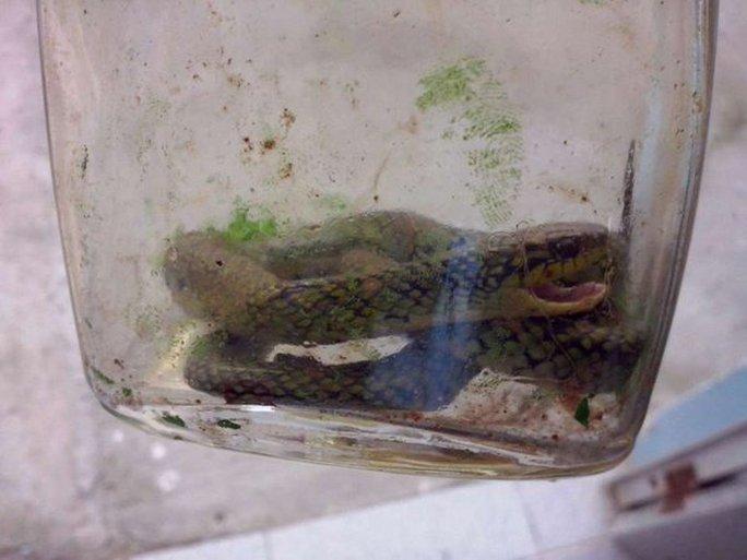 Xác con rắn được cho vào chai. Ảnh: Twitter