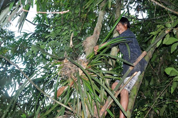 Không những đi rẫy bẫy thú, bẫy chim, người rừng còn vào những khu rừng hoang sơ tìm hái phong lan về bán lại, kiếm tiền mua gạo