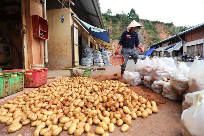 Khoai tây Trung Quốc lại tiếp tục được vào chợ nông sản Đà Lạt.