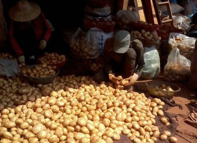 Khoai tây Trung Quốc đang được các tiểu thương làm giả khoai tây Đà Lạt