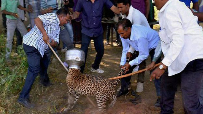 Con vật được người dân địa phương giải cứu. Ảnh: PTI