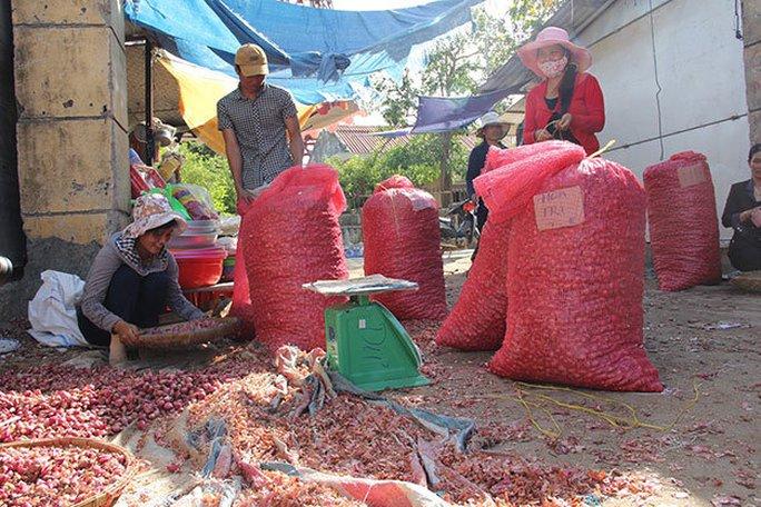 Hiện tại hành Lý Sơn đang có lượng tiêu thụ lớn và được mua rất nhiều - Ảnh: Trần Mai