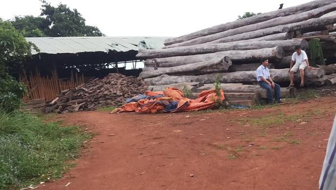 Bên trong một xưởng gỗ bị kiểm tra đột xuất