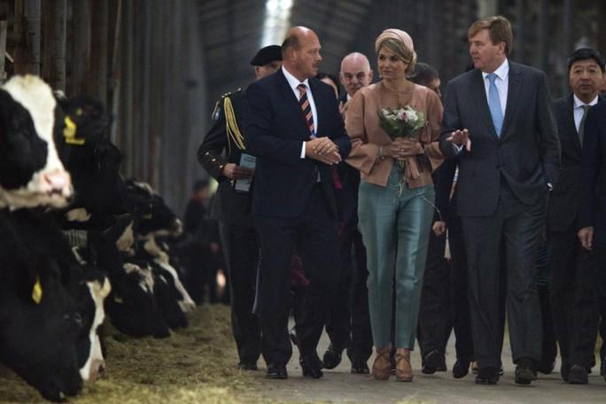 Quốc vương Willem-Alexander và Hoàng hậu Maxima thăm một trại bò sữa ở Bắc Kinh. Ảnh: AP