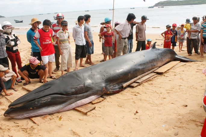 Trên thân cá có nhiều vết thương (Ảnh: Nguyễn Văn Sơn)