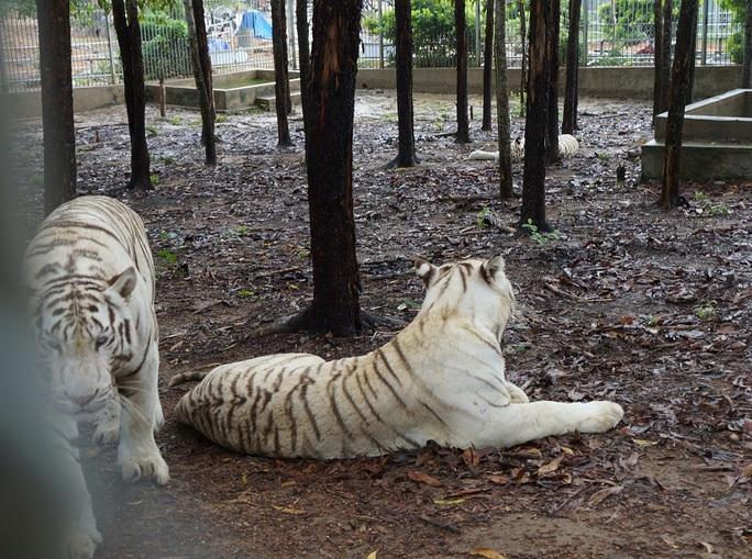 Đột nhập trang trại nuôi sư tử, hổ trắng, tê giác ở Nghệ An