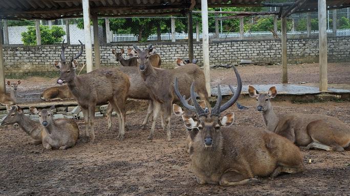 Nhiều loại động vật khác được nuôi nhốt tại trang trại.