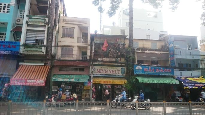 Hai cây dầu cổ thụ bị vây kín trên đường Lê Hồng Phong, quận 10, TP HCM