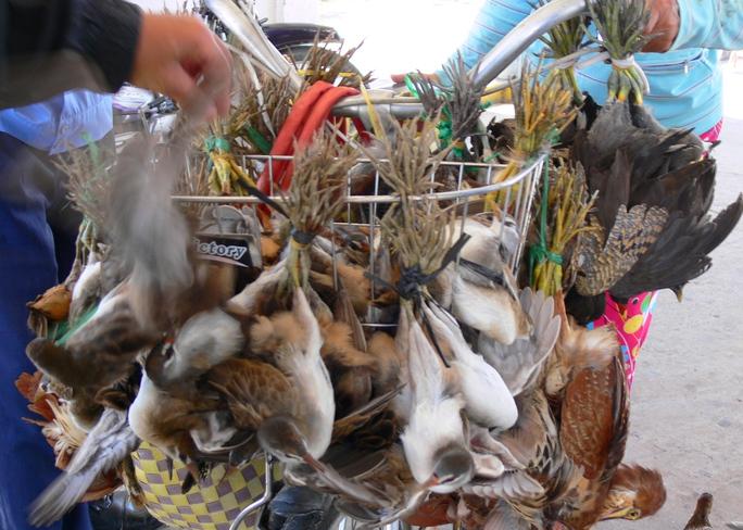 Hơn 100 kg chim, cò này sẽ bị làm thịt nếu như lực lượng bảo vệ rừng không phát hiện kịp thời.
