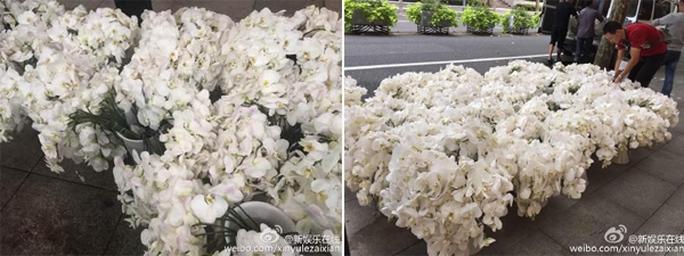 Hoa lan trắng được chuẩn bị sẵn