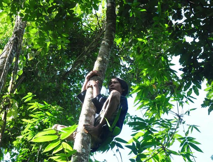 Anh Lang thoăn thoắt trên những đọt cây cao vút giữ núi rừng