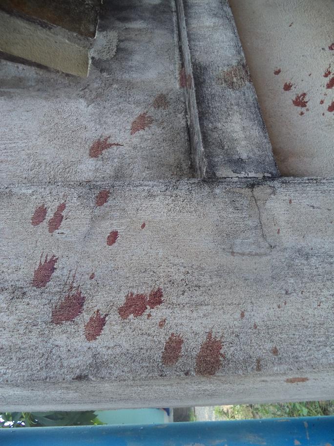 Vệt máu nạn nhân bị đâm chết trước cổng nhà