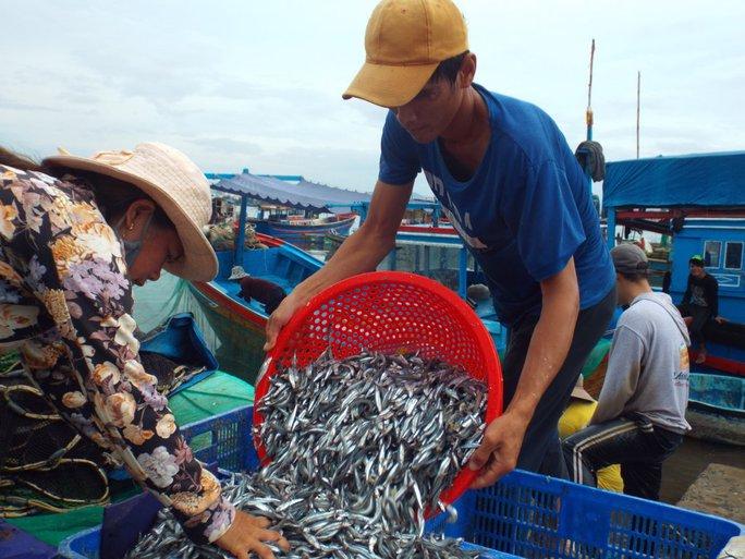 Thu nhập của ngư dân vào vụ cá cơm từ 10-15 triệu đồng/người