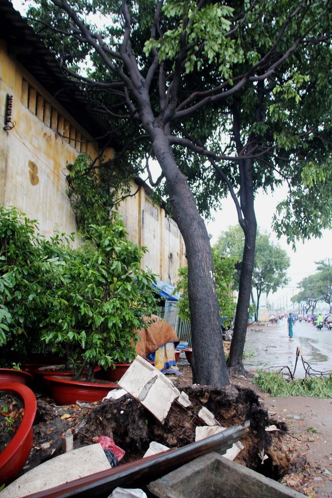 Nhiều cây bât gốc, đổ nghiêng do giông lốc