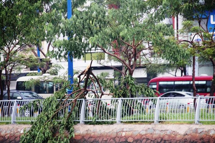 Đường Võ Văn Kiệt cũng có hàng loạt cây xanh bị gãy cành
