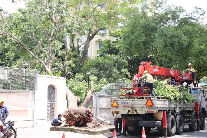 Toàn bộ thân cây đổ xuống khuôn viên Tổng Lãnh sự quán Nga tại TP HCM khiến vách tường sập đổ.
