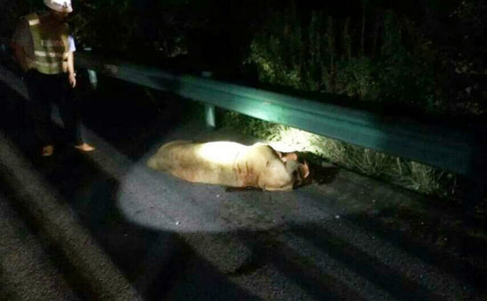 The lion was shot death by police on the Ningluo Expressway on September 7, 2015.