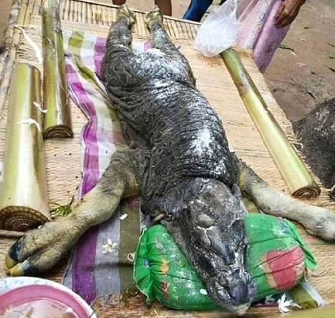 Con quái vật do một con trâu sinh ra ở Thái Lan Ảnh: THE DAILY MAIL