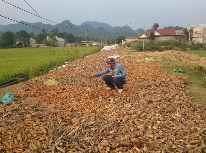 Một điểm tập kết thảo dược tại huyện Quỳ Hợp, tỉnh Nghệ An Ảnh: Hải Vũ