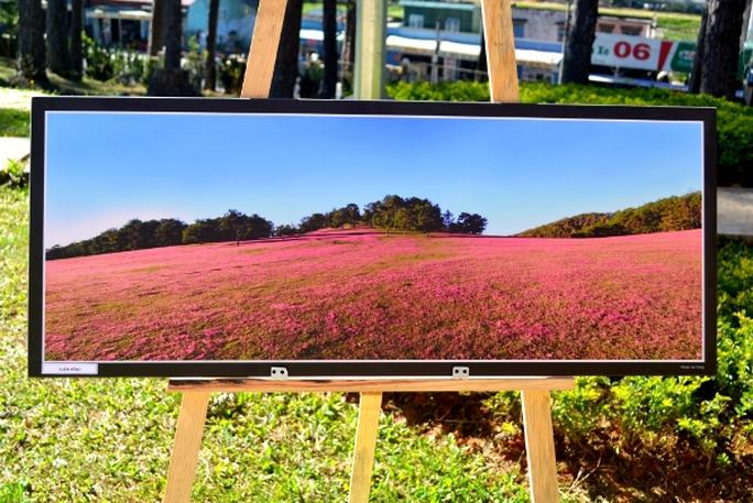Đà Lạt tuyệt đẹp tại triển lãm ảnh mừng Festival hoa