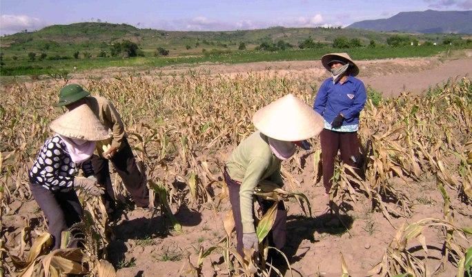 Do thiếu nước, nhiều diện tích đất sản xuất ở Tây Nguyên cho hiệu quả rất thấp. Ảnh: Cao Nguyên