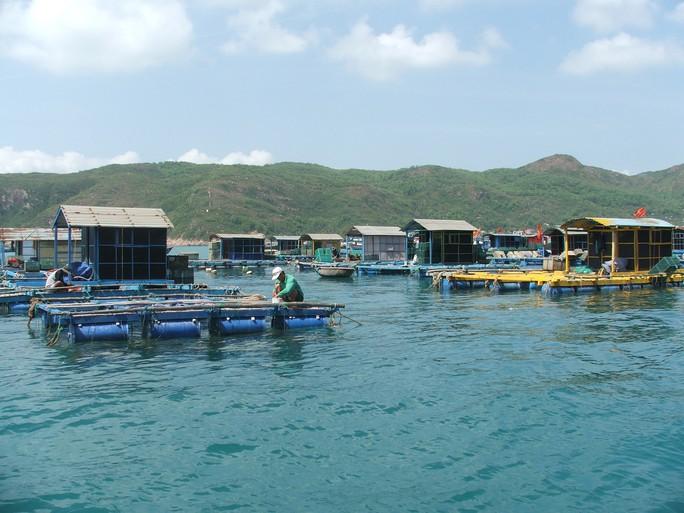 Các nhà bè nuôi tôm hùm ở xã Nhơn Hải
