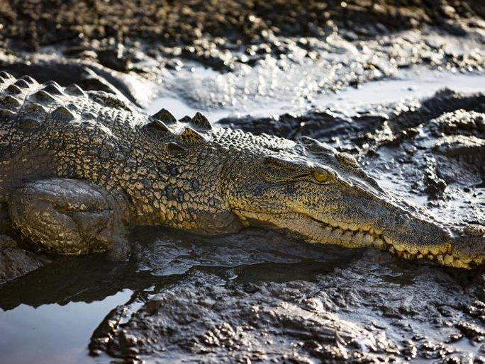 Vùng Top End thuộc TP Darwin nổi tiếng là nơi sinh sống của quần thể cá sấu với khoảng 100.000 con. Ảnh:AAP