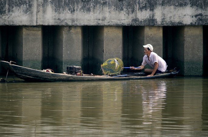 Người đàn ông này dùng vợt liên tục hớt những chú cá đang nổi lên mặt nước để thở. Người này cho biết vợt được hàng chục kí cá mỗi ngày.