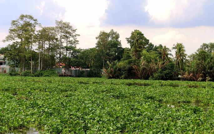 Lục bình hiện đang uy hiếp trên sông Sài Gòn