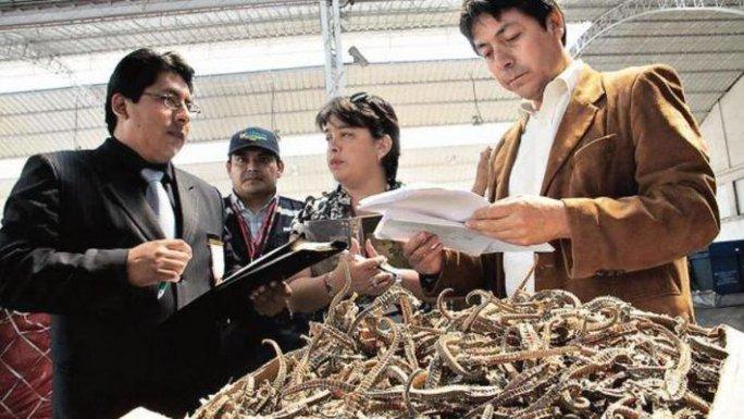 Peru thu giữ 8 triệu con cá ngựa chuẩn bị xuất sang Trung Quốc. Ảnh: USI