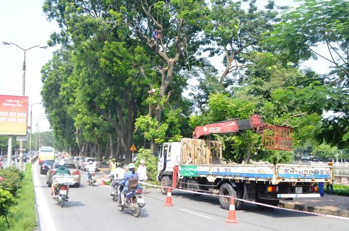 Sáng ngày 16-9 Ban quản lý đường sắt Đô thị Hà Nội, đã triển khai kế hoạch cắt tỉa, di dời cây xanh phố Kim Mã (quận Cầu Giấy) để phục vụ thi công dự án tuyến Đường sắt đô thị trên cao Nhổn-ga Hà Nội