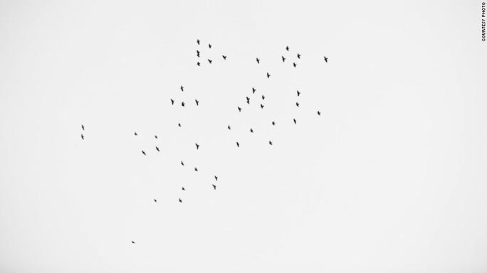 Nhiều người đã đếm đi đếm lại số chim trong bức ảnh và không khỏi sửng sốt khi nhận ra có đúng 49 con. Ảnh: CNN