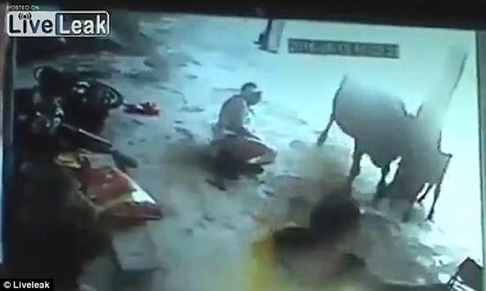 Vụ hành quyết chấm dứt vì sự can thiệp của chú bò. Ảnh: Liveleak