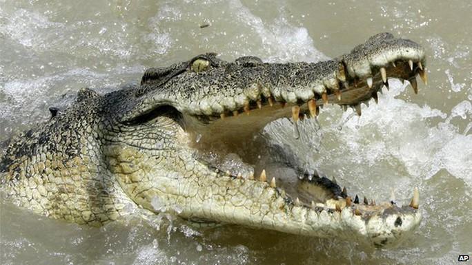 Cá sấu nước mặn - một trong những động vật chết chóc nhất ở Úc. Ảnh: AP