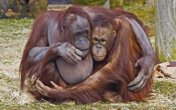Ấm áp làm sao! Cảnh tượng trong Vườn thú Blackpool - Anh. Ảnh: Gary Kenyon/Solent News/REX/Shutterstock