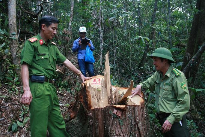 Tỉnh Quảng Nam khẳng định có dấu hiệu bảo kê cho lâm tặc