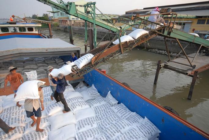 Xuất khẩu gạo năm 2015 gặp nhiều khó khăn do giá giảm và bí đầu ra Ảnh: NGỌC TRINH