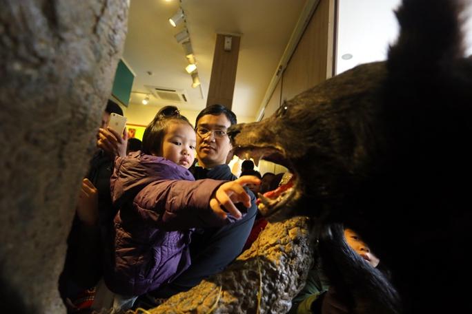 Một ông bố trẻ bế con sờ vào răng mẫu vật gấu Đông Dương