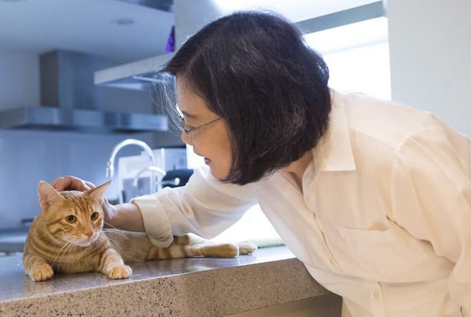 Chú mèo giúp bà Thái dành nhiều tình cảm của người dân. Ảnh: TSAI ING-WEN/FACEBOOK