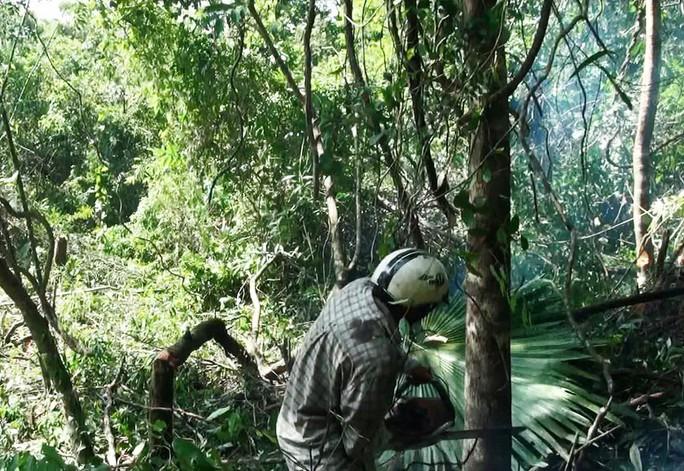Khu rừng này có nguy cơ bị chặt phá nếu dự án nuôi bò được thực hiện Ảnh: MINH TÂM