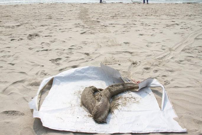 Cá chết rải rác xuất hiện ở biển Đà Nẵng và Cù Lao Chàm