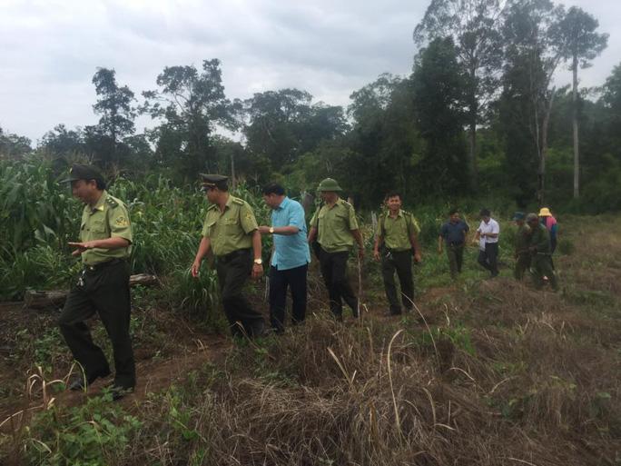Lực lượng chức năng tổ chức xua đuổi voi rừng. Ảnh trung tâm bảo tồn voi cung cấp