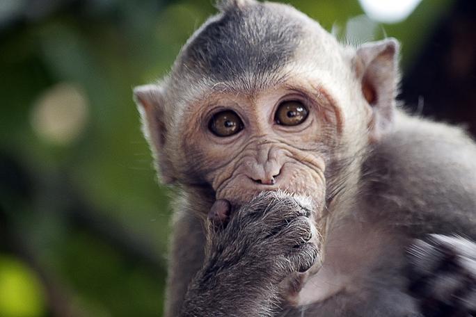 Các cơ quan chức năng tỉnh Bình Dương cần thiết lập đường dây nóng với lực lượng công an, kiểm lâm để người dân kịp thời thông báo, xử lý khi thấy đàn khỉ bị xâm hại.