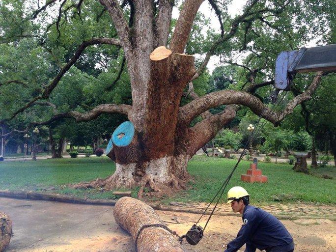 Hình ảnh đưa đăng trên mạng xã hội Facebook tỏ ra tiếc nối khi cây bị cưa
