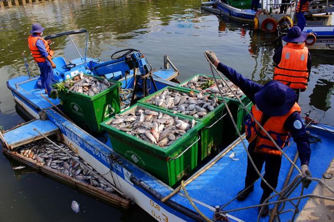 Những ca nô chỉ vớt trong khoảng nửa tiếng đồng hồ đã chất đầy hàng tấn cá chết chờ về bến để tập trung về bến bến gần Nhà thi đầu Rạch Miễu, quận Phú Nhuận để chuyển lên xe rác.