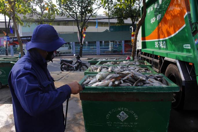 Xác cá tập trung về một chỗ và được công nhân phun các loại thuốc khử trùng để tránh gây ô nhiễm môi trường.
