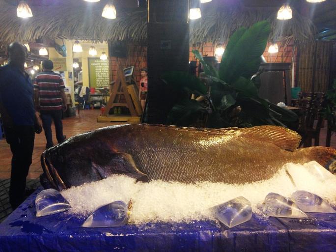 Cá khủng dài 2m, nặng 160kg