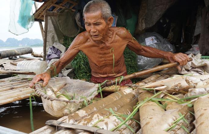 Cá lồng của nhiều hộ nuôi tại xã Cẩm Ngọc, huyện Cẩm Thủy, tỉnh Thanh Hóa chết hàng loạt